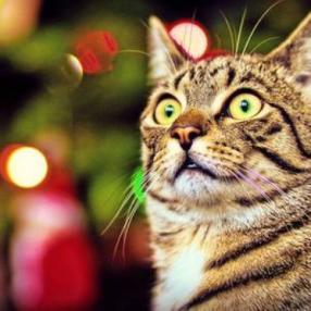 Новогодняя елка для котолюбителей